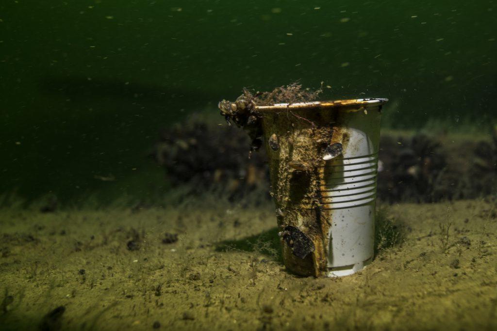 En plastmugg på ett 1800-talsvrak (arbetsnamn Stjärnevi) visar att även om ingen dykare besökt vraket, syns avtryck av moderna tider ändå. Foto: Robert Hansson